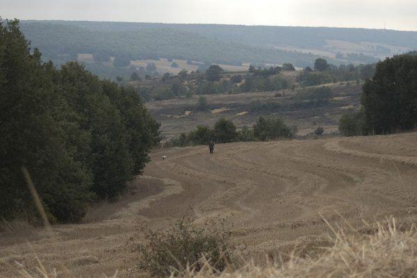 Coto caza codorniz en Palencia