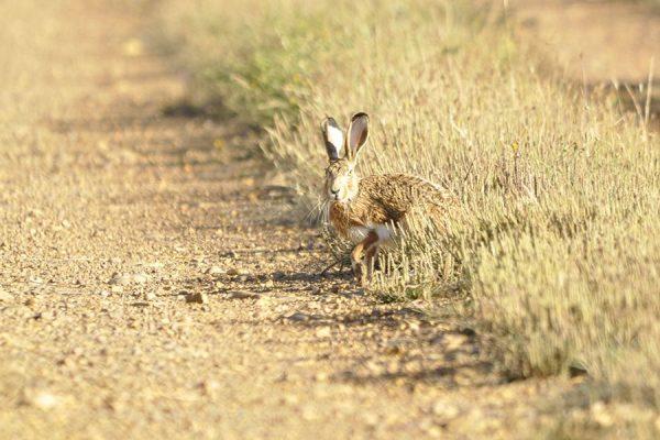 Coto de caza Tabanera de Valdavia | Cotos de Caza menor en España