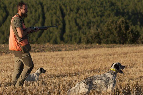 Coto de caza de zorro en Palencia | Cotos caza zorro en España | Coto de Caza Tabanera de Valdavia