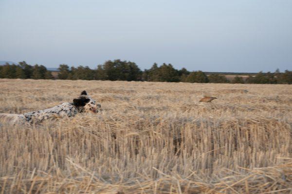 Coto de caza de codorniz en Palencia | Cotos caza de codorniz en España | Coto de Caza Tabanera de Valdavia