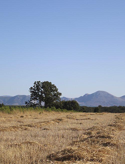 Coto de caza de perdiz en Palencia | Cotos caza perdiz en España | Coto de Caza Tabanera de Valdavia