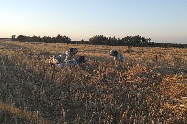 Cotos de codorniz en Palencia | Tabanera de Valdavia