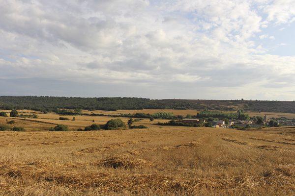 Fotos de Caza de Codorniz en Palencia | Coto de Caza Tabanera de Valdavia.